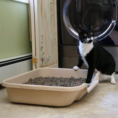 KittyGoHere Litter Box Senior Cat Litter Box