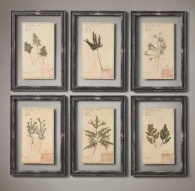 19th C. Framed Herbariums (Set of 6) - Black