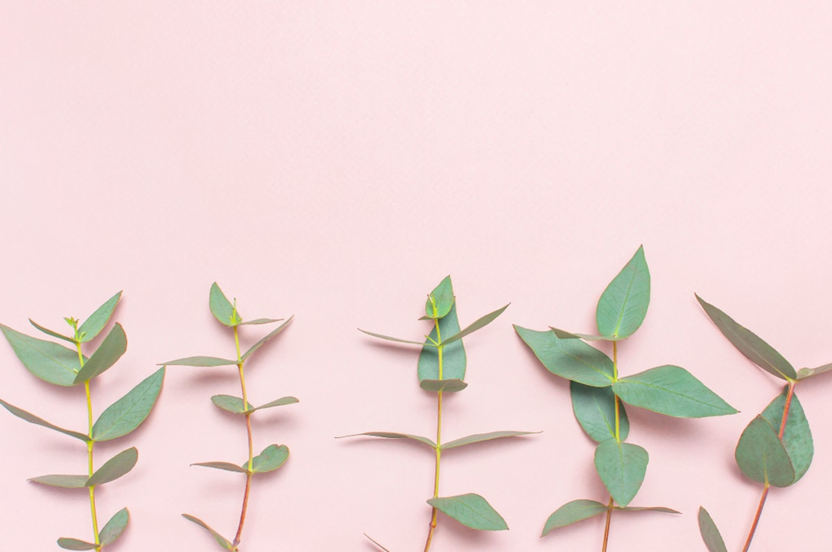 What Are The Benefits Of Eucalyptus Oil? The List Is Never-Ending, But You Definitely Shouldn't Eat It