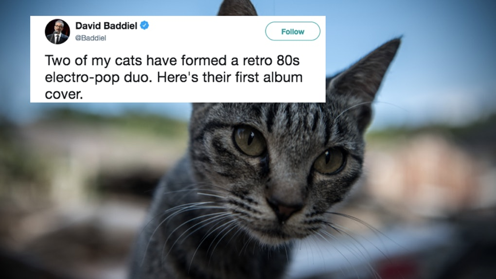 These Tweets About Pets That Look Like Album Covers Feature