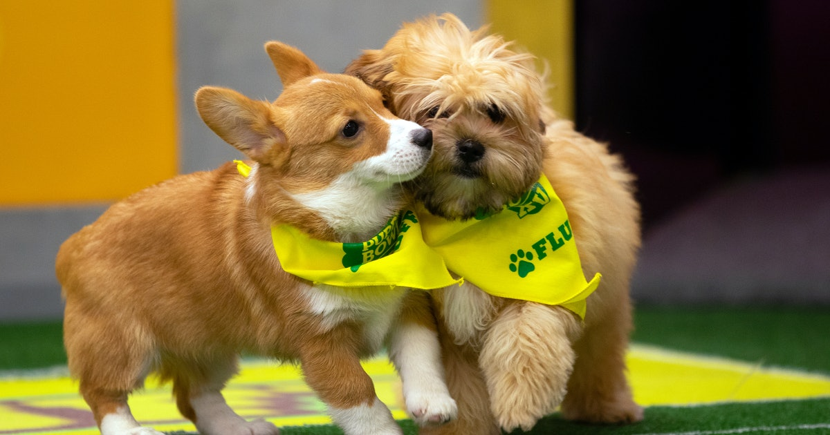 The 2019 Puppy Bowl Puppies Ranked By Cuteness, Because There Can Only Be One Top Dog