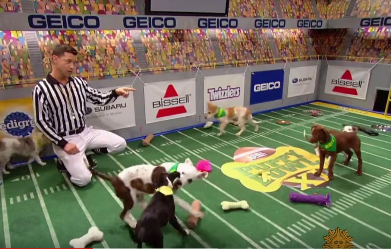 7 facts about the puppy bowl that might surprise you