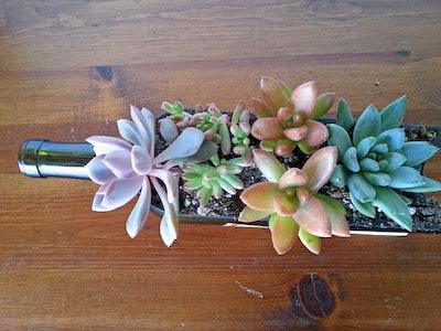 Glass Succulent Planter