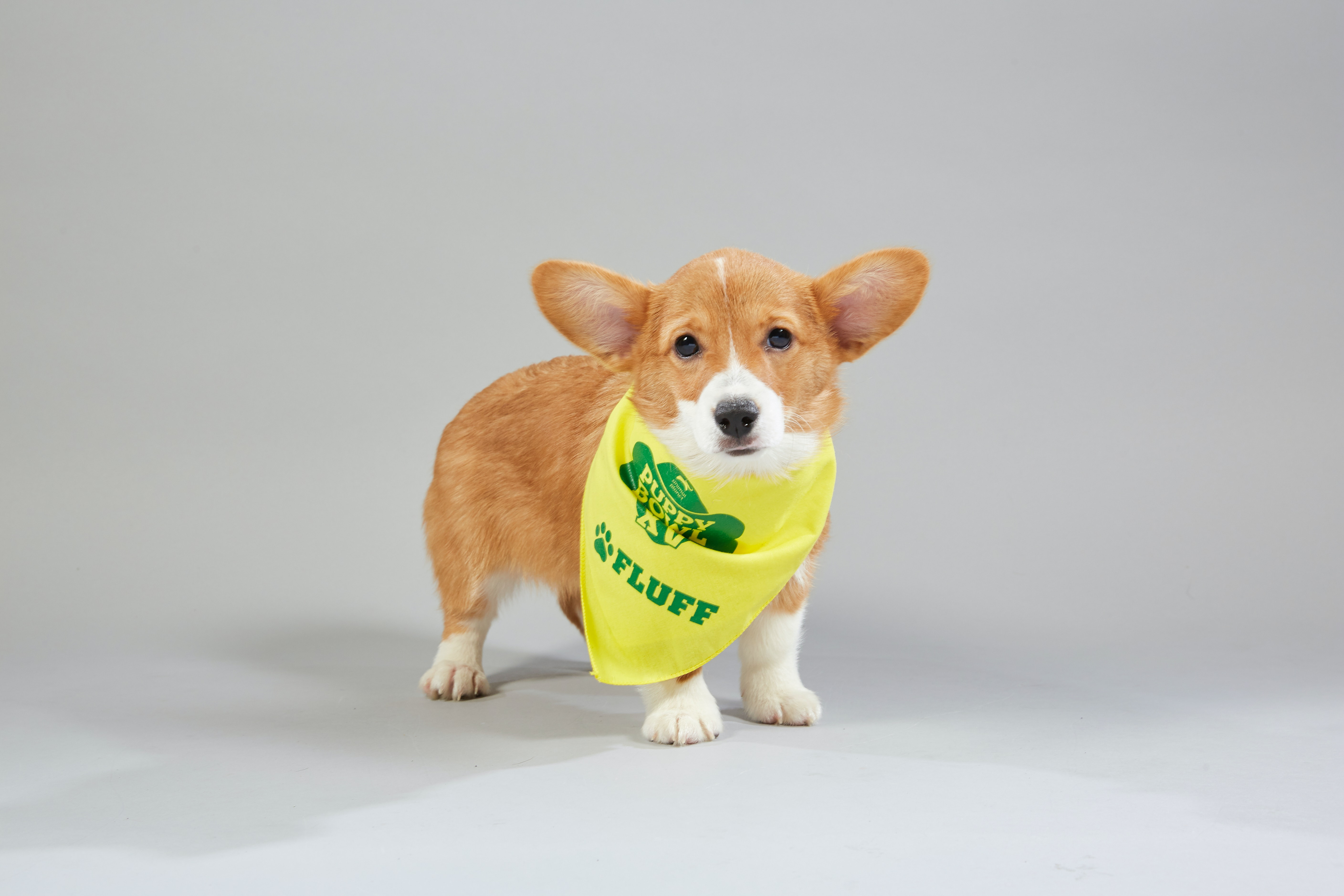 The 2019 Puppy Bowl Lineup Is Here To Show Off The Cutest