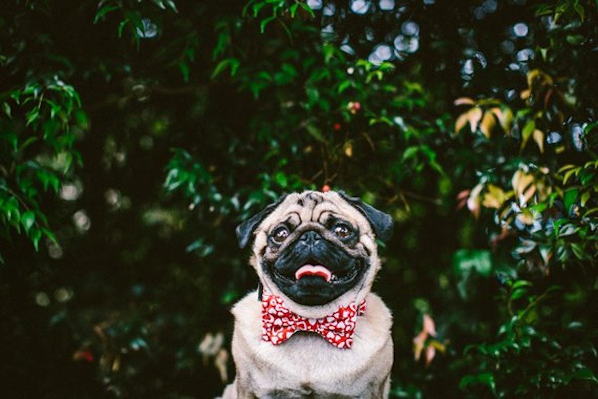 Dog Bow Tie + Collar Set | Love Hearts
