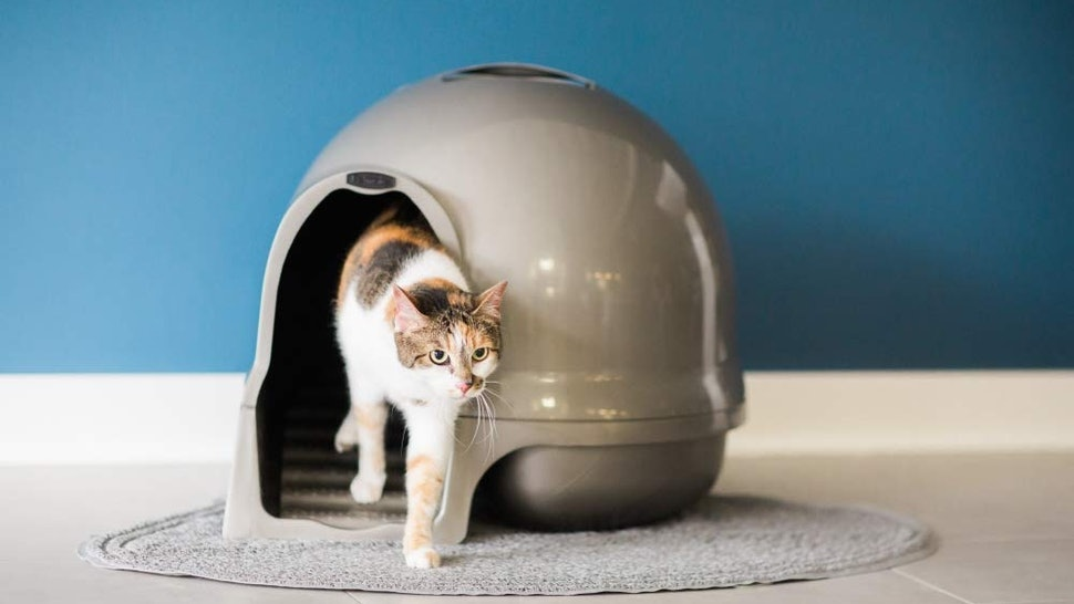 The 4 Best Litter Boxes For Older Cats