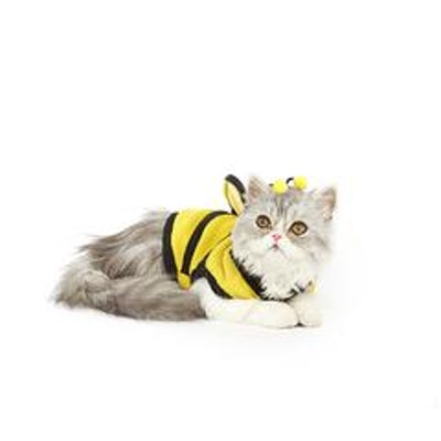 Bumblebee Cat Costume