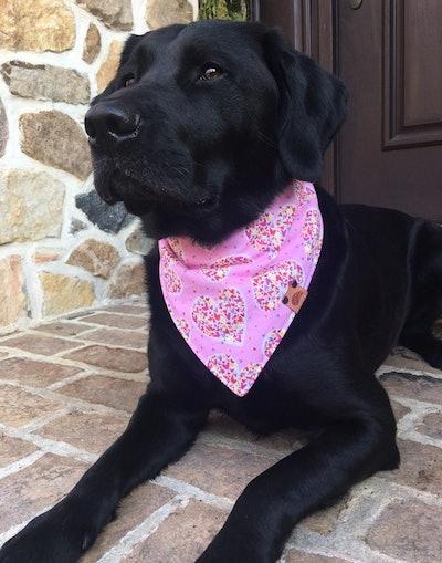 Valentine Dog Bandana
