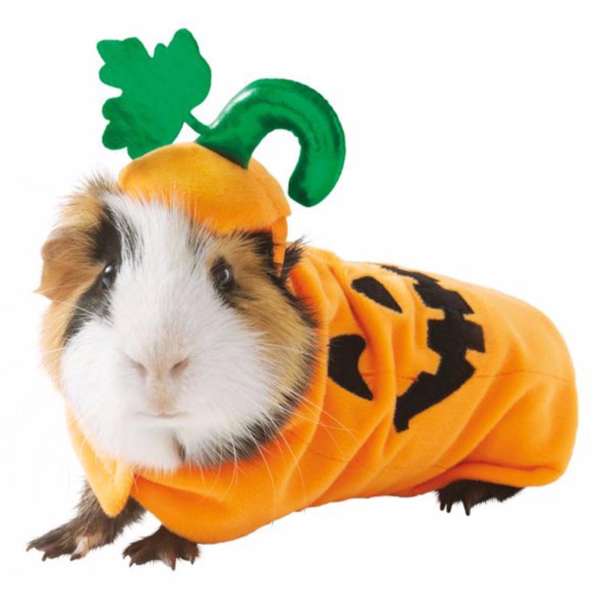 Thrills & Chills™ Pumpkin Small Pet Costume