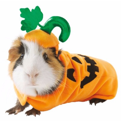 Thrills & Chills™ Pumpkin Small Pet Costume