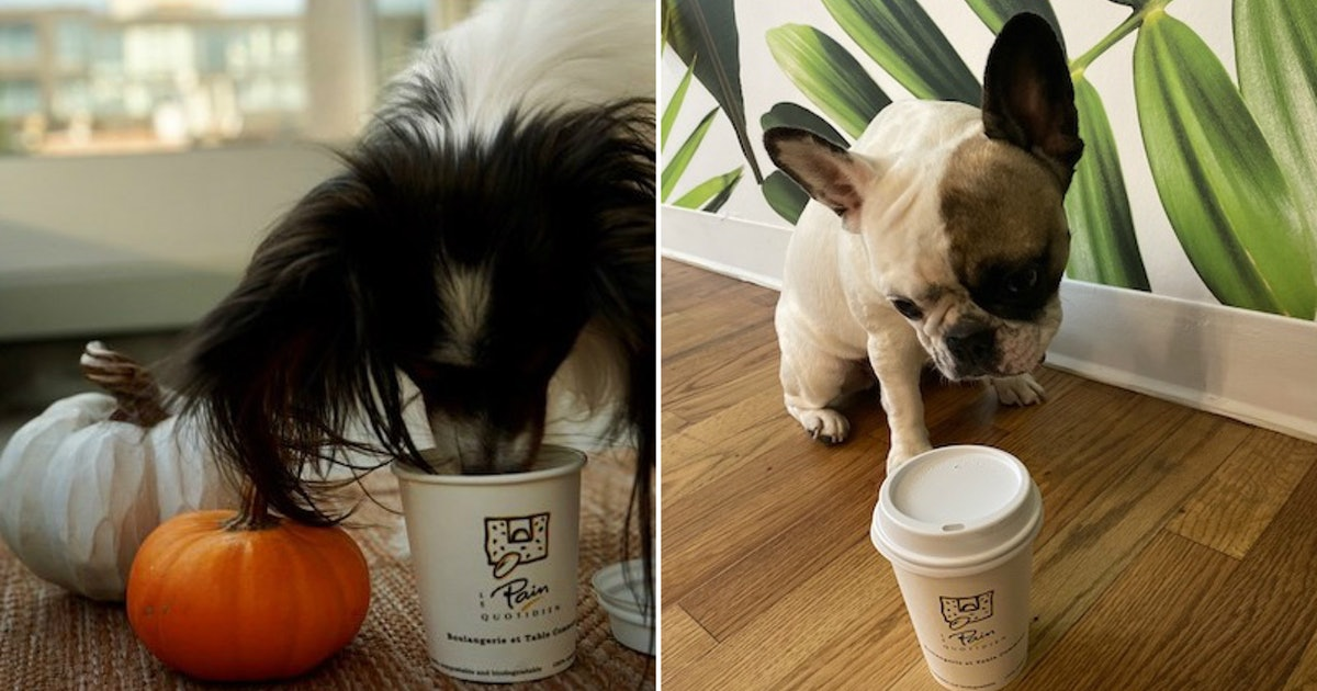 Le Pain Quotidien's PAWmpkin Spiced Latte For Dogs Is A Real Treat