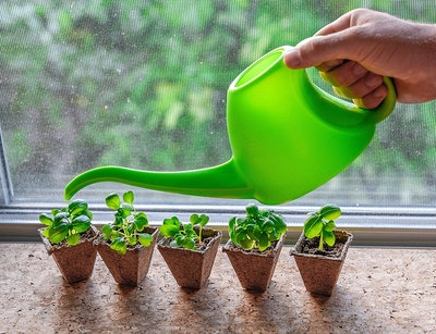 Mr. Sprout Organic Vegetable Growing Kit