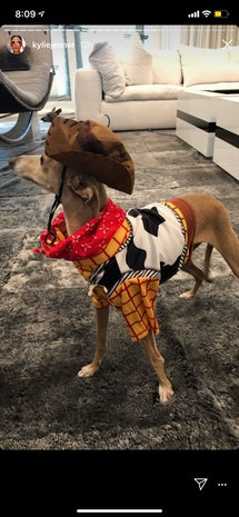 One of Kylie Jenner's dogs dressed up as Woody from 'Toy Story'