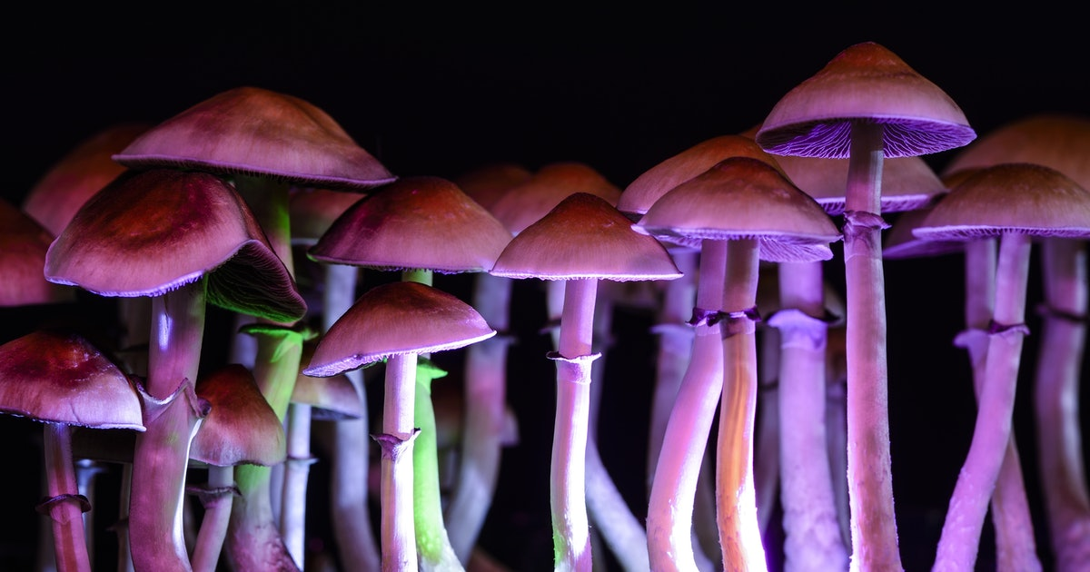 How psychedelic drugs treat mental illness differently than traditional medicine