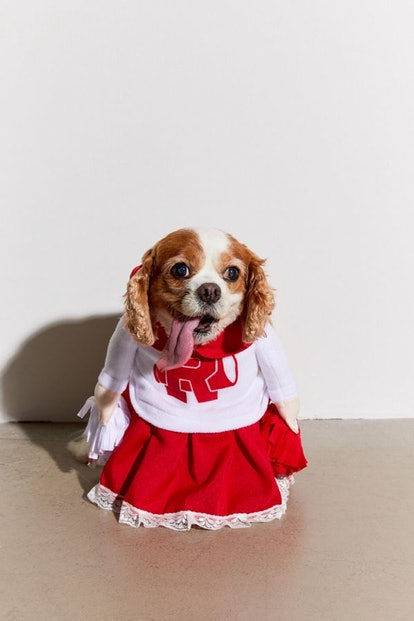 Cheerleader Dog Halloween Costume