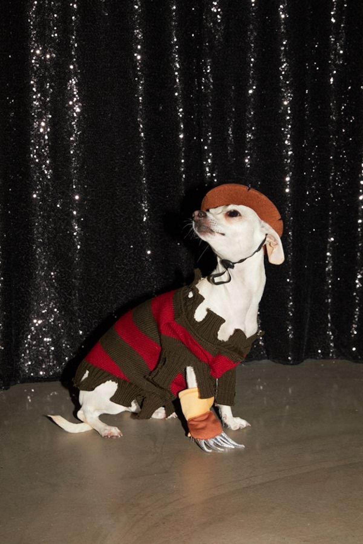Freddy Krueger Dog Halloween Costume