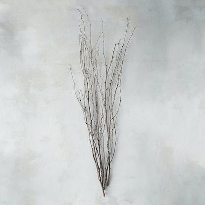 Birch Stem Bunch
