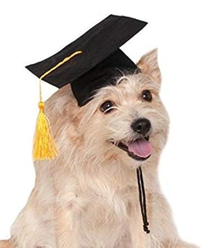 Rubie's Graduation Hat Pet Accessory