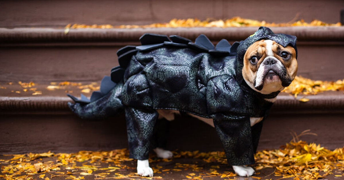 These Tweets About Pets' Halloween 2019 Costumes Are A Howl-O-Ween Treat