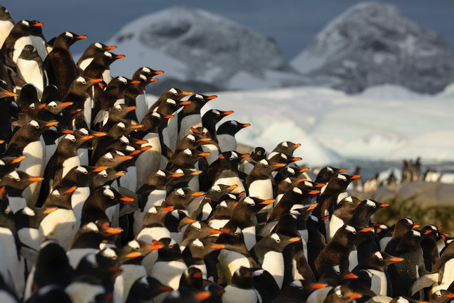 Penguin populations could be threatened if global warming continues, says Seven Worlds, One Planet