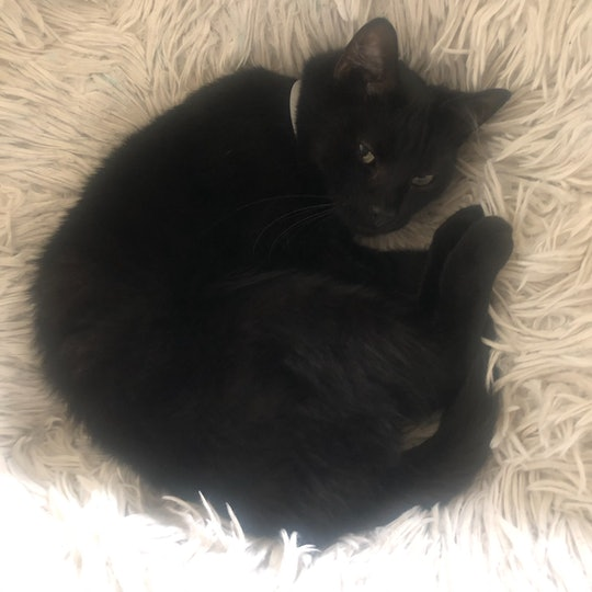 picture of a jerkface black cat lounging in the author's papasan chair, willing to do battle to anyone who bothers him.