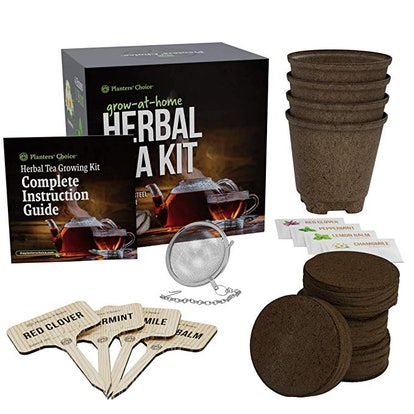 Grow 4 of Your Own Organic Herbal Tea Kit