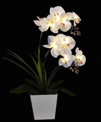 Homeseasons Orchid Arrangement with LED Lights