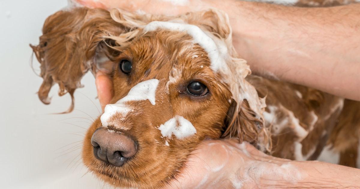The 4 Best Dog Shampoos