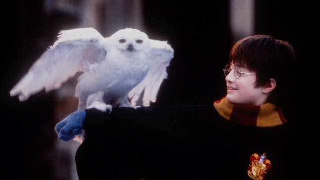 Dress as a Hogwarts student and owl with this 'Harry Potter' matching dog and owner Halloween costume.
