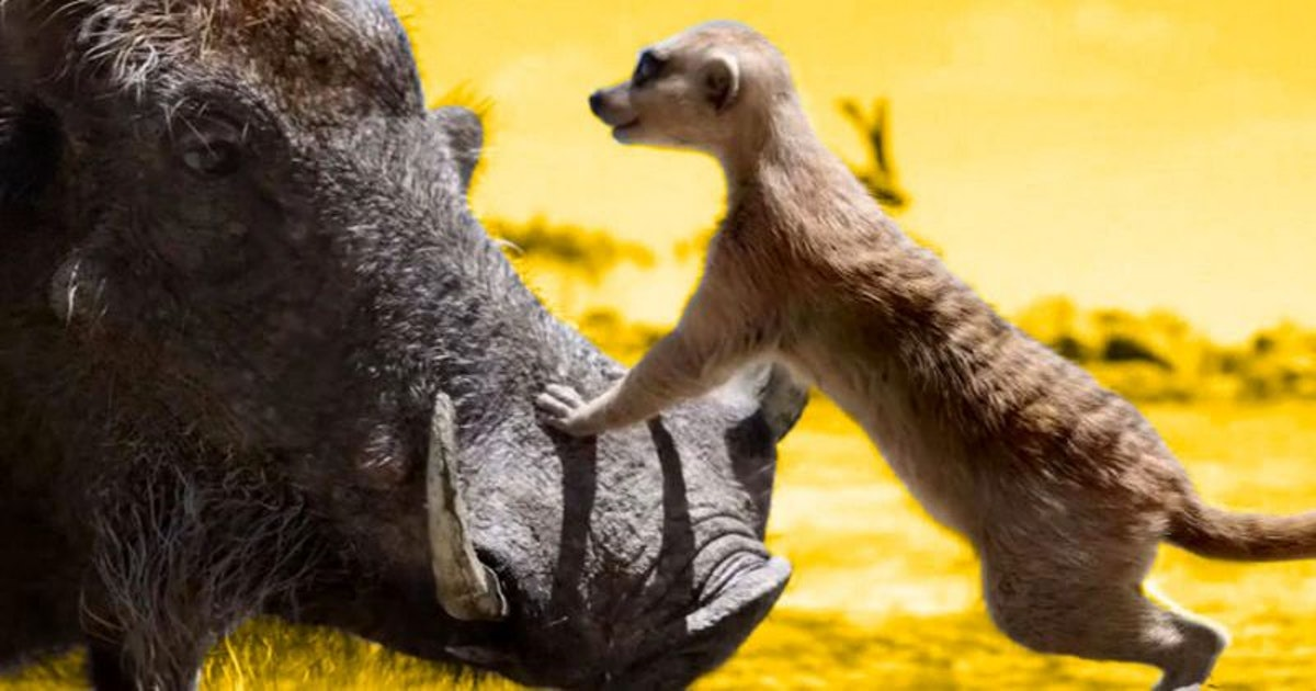 Timon in Disney's Live Action The Lion King