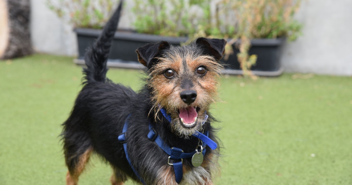 These Are The Dogs At Battersea That Need A New Family For Christmas 2019