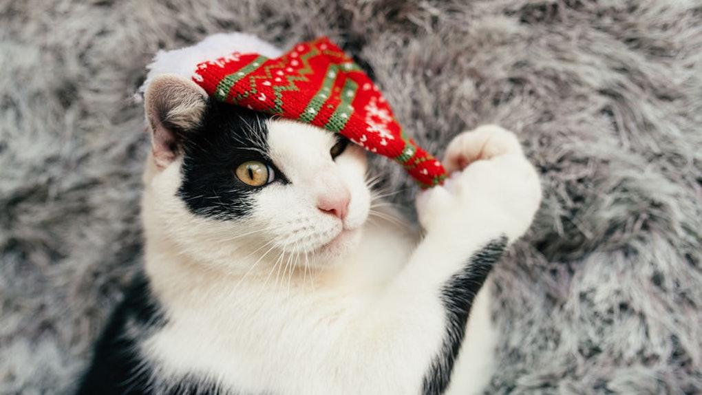 Trader Joe's 2019 Cat Advent Calendar includes 25 treats.