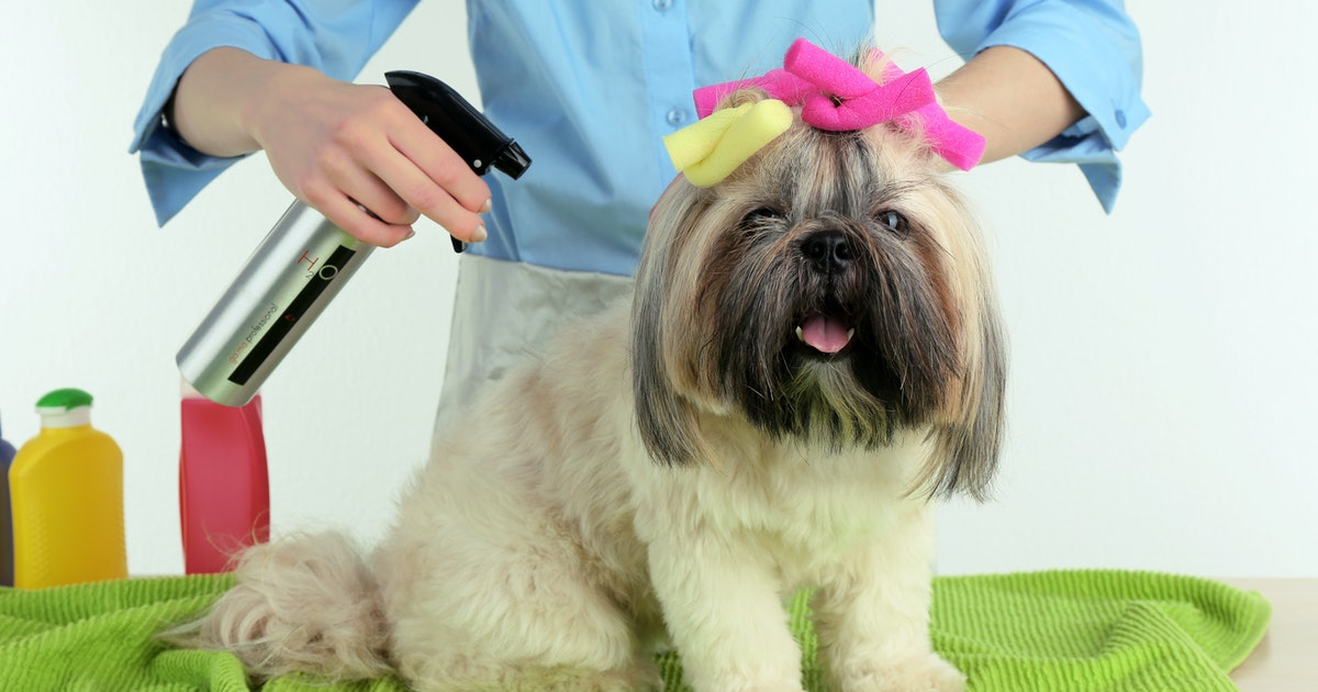 The 3 Best Dry Shampoos For Dogs