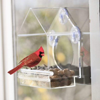 Window Bird Feeder House by Nature Anywhere