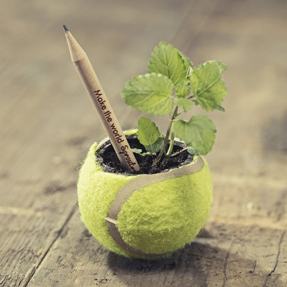 Sprout Plantable Graphite Pencils (8-Pack)