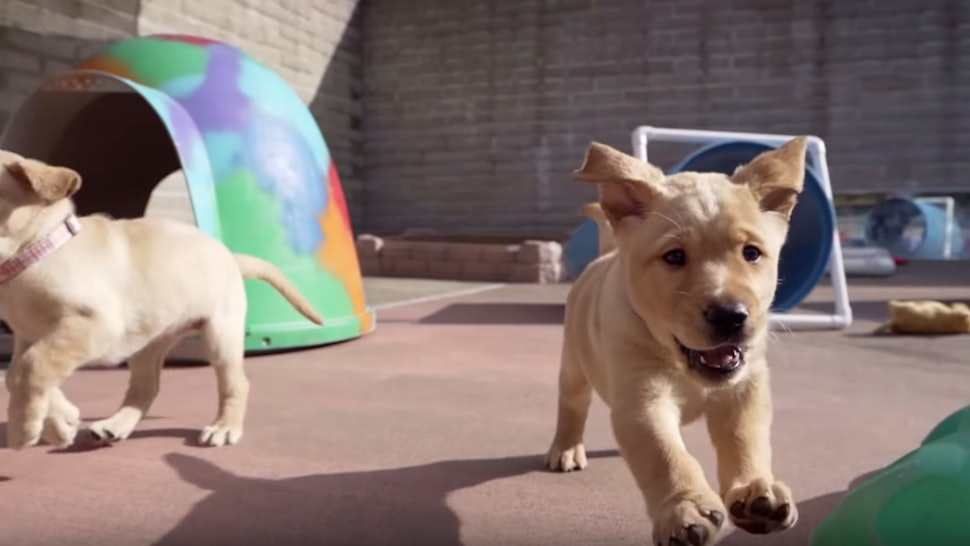 Disney+'s 'Pick Of The Litter' trailer is a bundle of cuteness.