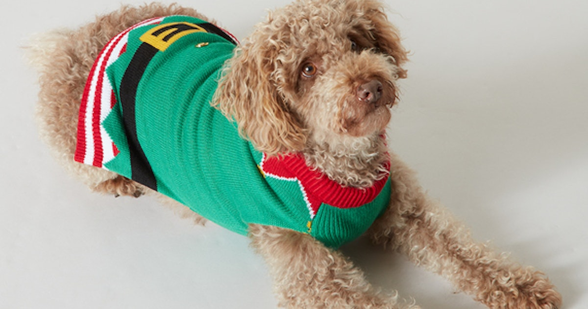 Sainsbury's Are Selling Matching Festive Jumpers For You & Your Pup In Time For Christmas 2019