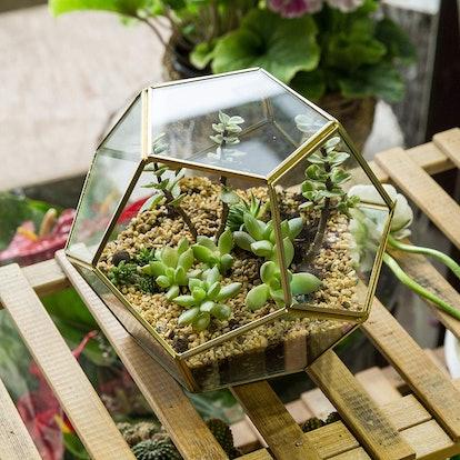 NCYP Brass Glass Terrarium Container