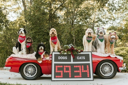 Consumers spend more money on dogs than cats for the holidays.
