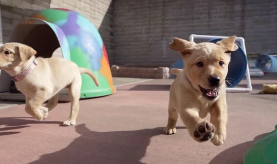 """Pick of the Litter"" on Disney+ follows six adorable puppies as they train to become guide dogs."