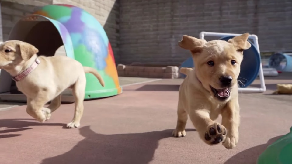 """""""Pick of the Litter"""" on Disney+ follows six adorable puppies as they train to become guide dogs."""