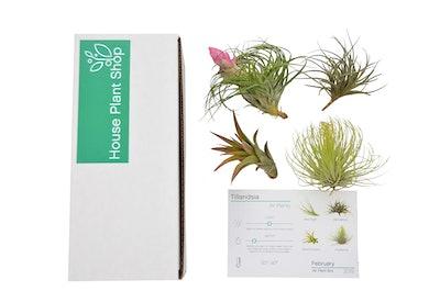 House Plant Box Subscription