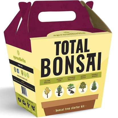 Sproutbrite Bonsai Tree Starter Kit