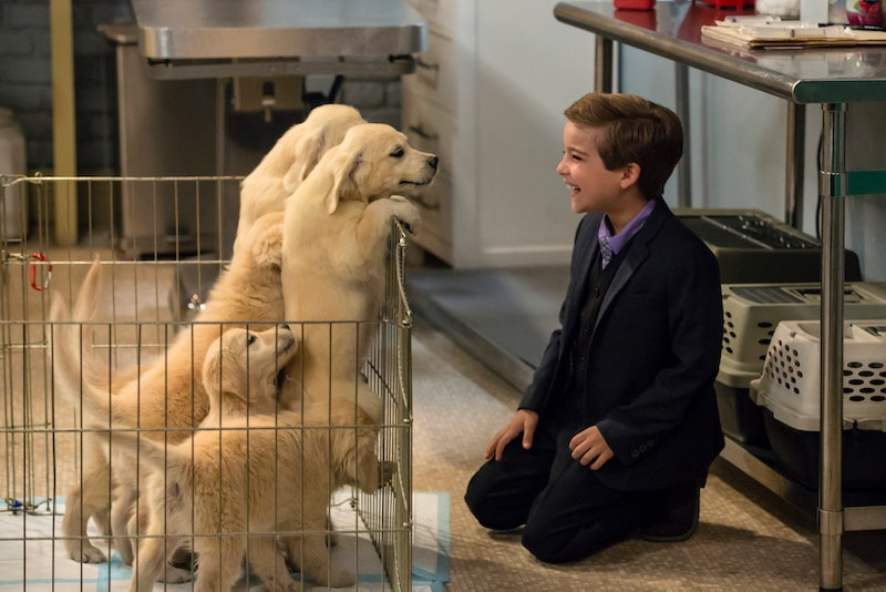 The 'Fuller House' Dog Died & The Cast Is Mourning The Loss