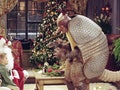 Ross dresses up as the Holiday Armadillo on 'Friends.'