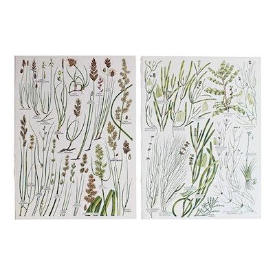 Vintage Botanical Wheat Prints