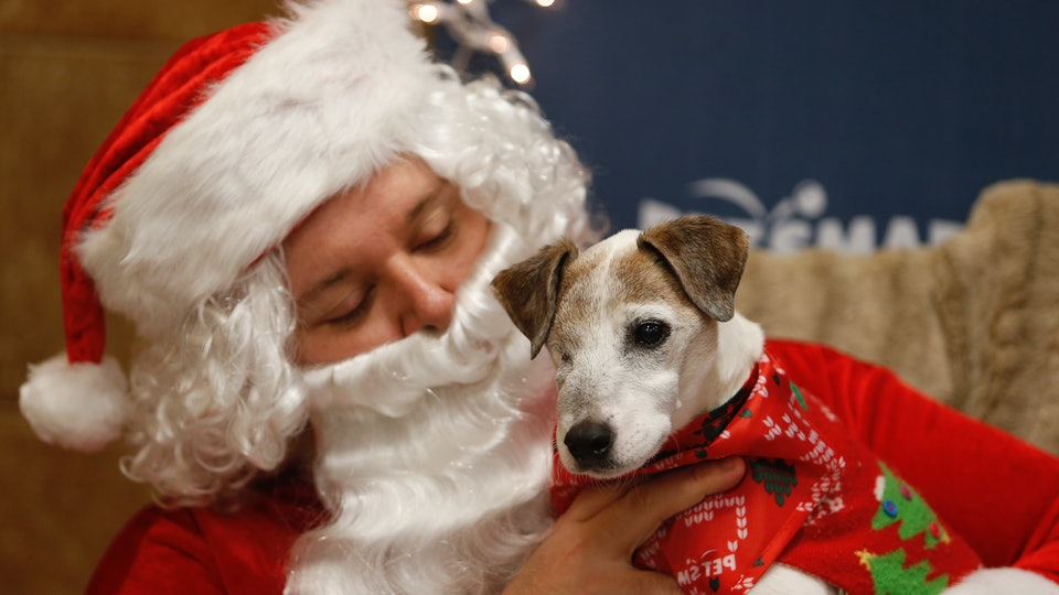 PetSmart is hosting holiday events for pets throughout December.