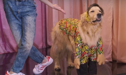 Cosmo the dog in Fuller House Season 5