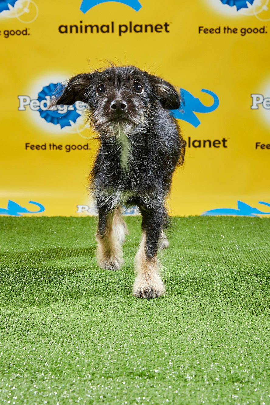 The Puppies From The 2019 Puppy Bowl Are The Real Stars Of