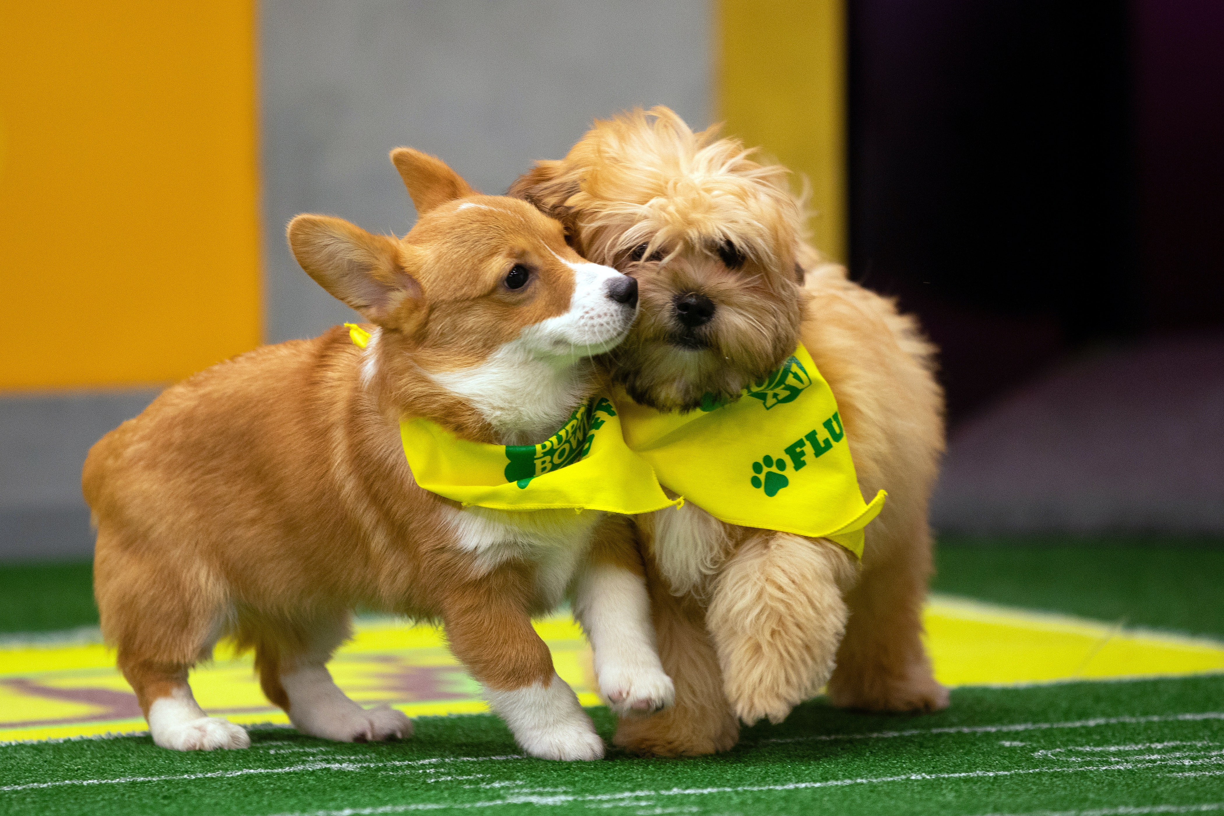 Adopt The 2019 Puppy Bowl Puppies